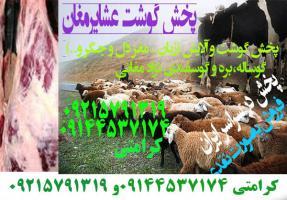 فروش گوشت و آلایش (زبان ، مغز دل و جگر و..) گوساله،بره و گوسفندی نژاد مغانی