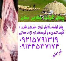 خرید گوشت قرمز نژاد مغانی